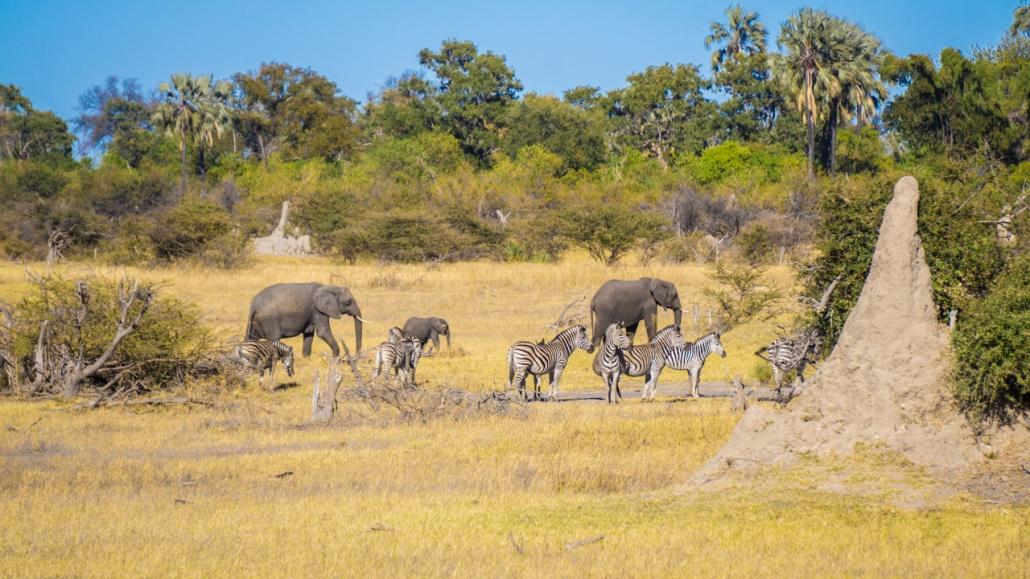 In the Okavango Delta