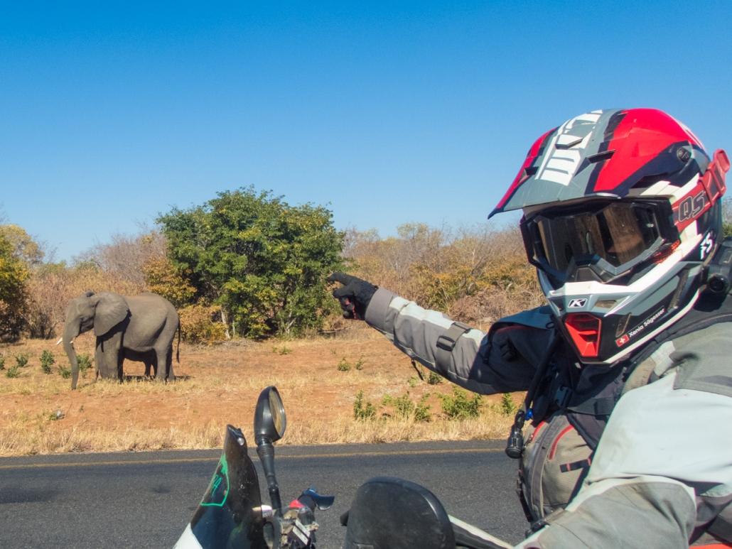 Elefants along the road
