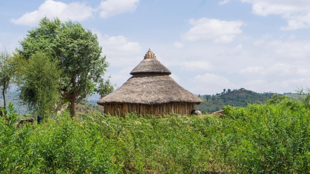 Amazing huts